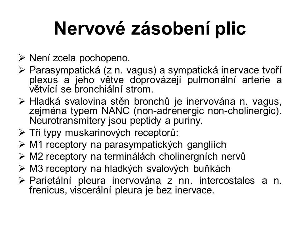 Nervové zásobení plic  Není zcela pochopeno.  Parasympatická (z n. vagus) a sympatická inervace tvoří plexus a jeho větve doprovázejí pulmonální art
