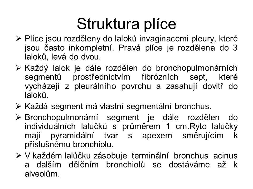 Struktura plíce  Plíce jsou rozděleny do laloků invaginacemi pleury, které jsou často inkompletní. Pravá plíce je rozdělena do 3 laloků, levá do dvou