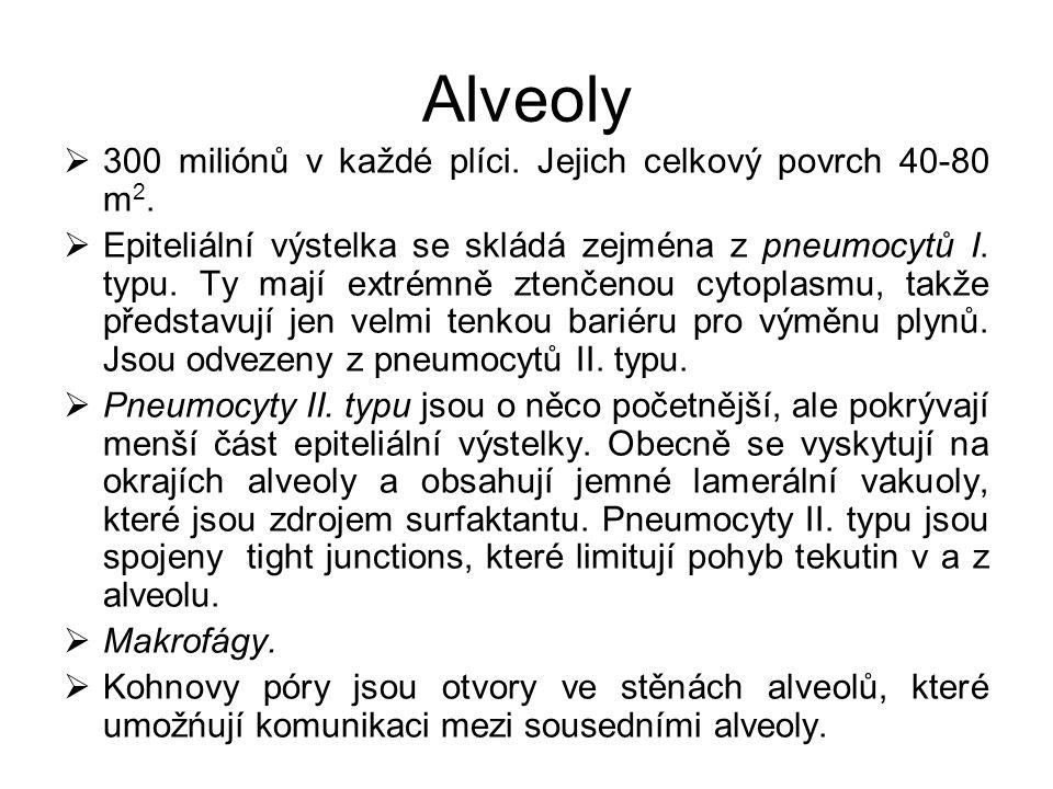 Alveoly  300 miliónů v každé plíci. Jejich celkový povrch 40-80 m 2.  Epiteliální výstelka se skládá zejména z pneumocytů I. typu. Ty mají extrémně