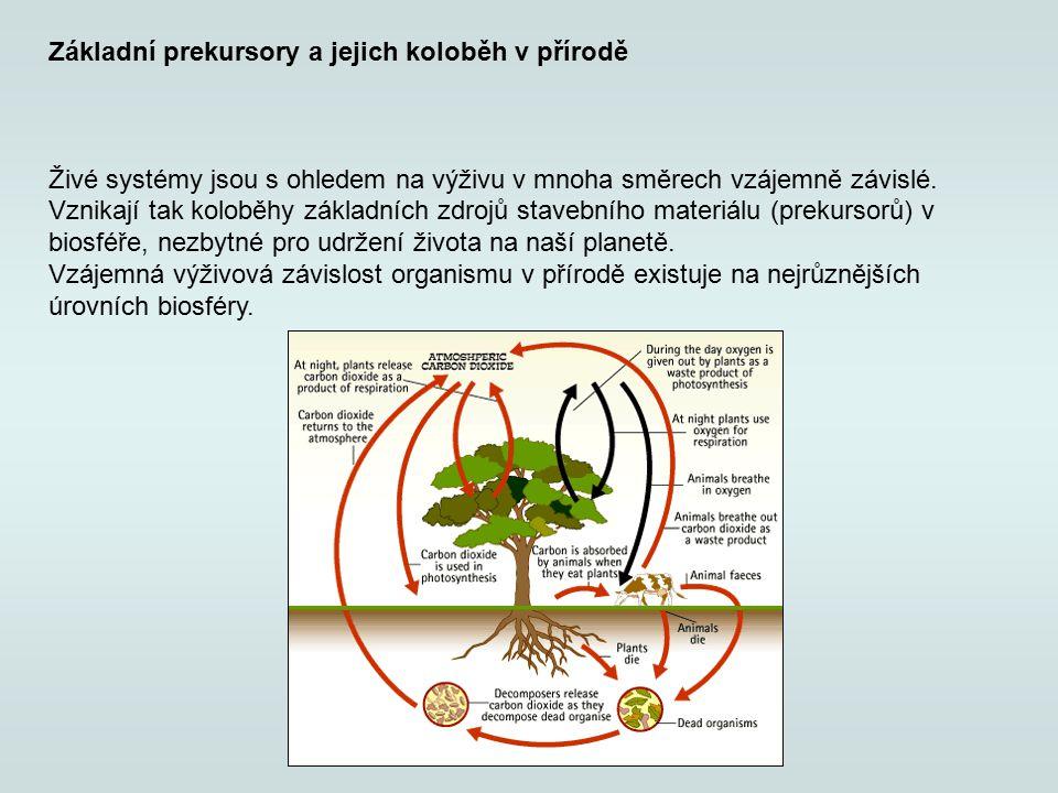 Základní prekursory a jejich koloběh v přírodě Živé systémy jsou s ohledem na výživu v mnoha směrech vzájemně závislé. Vznikají tak koloběhy základníc
