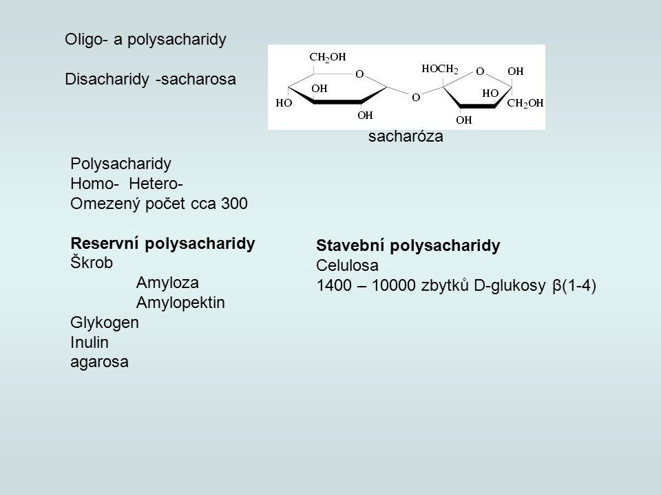 sacharóza Oligo- a polysacharidy Disacharidy -sacharosa Polysacharidy Homo- Hetero- Omezený počet cca 300 Reservní polysacharidy Škrob Amyloza Amylopektin Glykogen Inulin agarosa Stavební polysacharidy Celulosa 1400 – 10000 zbytků D-glukosy β(1-4)