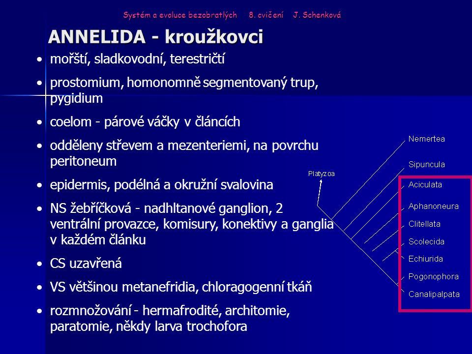 ANNELIDA - kroužkovci Systém a evoluce bezobratlých 8. cvičení J. Schenková mořští, sladkovodní, terestričtí prostomium, homonomně segmentovaný trup,