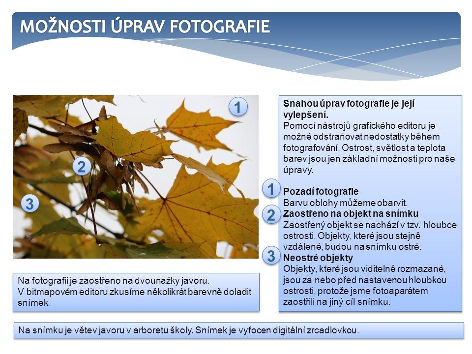 Na fotografii je zaostřeno na dvounažky javoru.