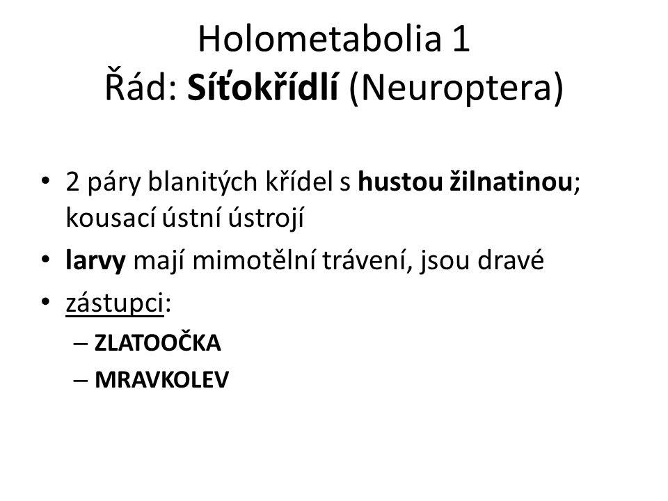 Holometabolia 1 Řád: Síťokřídlí (Neuroptera) 2 páry blanitých křídel s hustou žilnatinou; kousací ústní ústrojí larvy mají mimotělní trávení, jsou dravé zástupci: – ZLATOOČKA – MRAVKOLEV