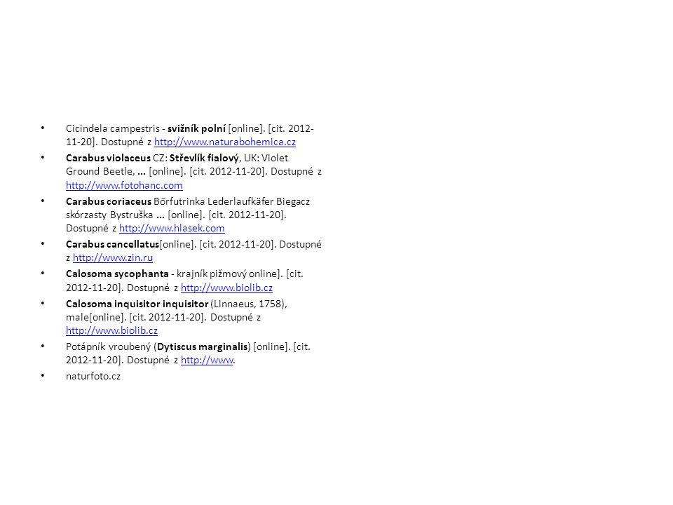 Cicindela campestris - svižník polní [online]. [cit.