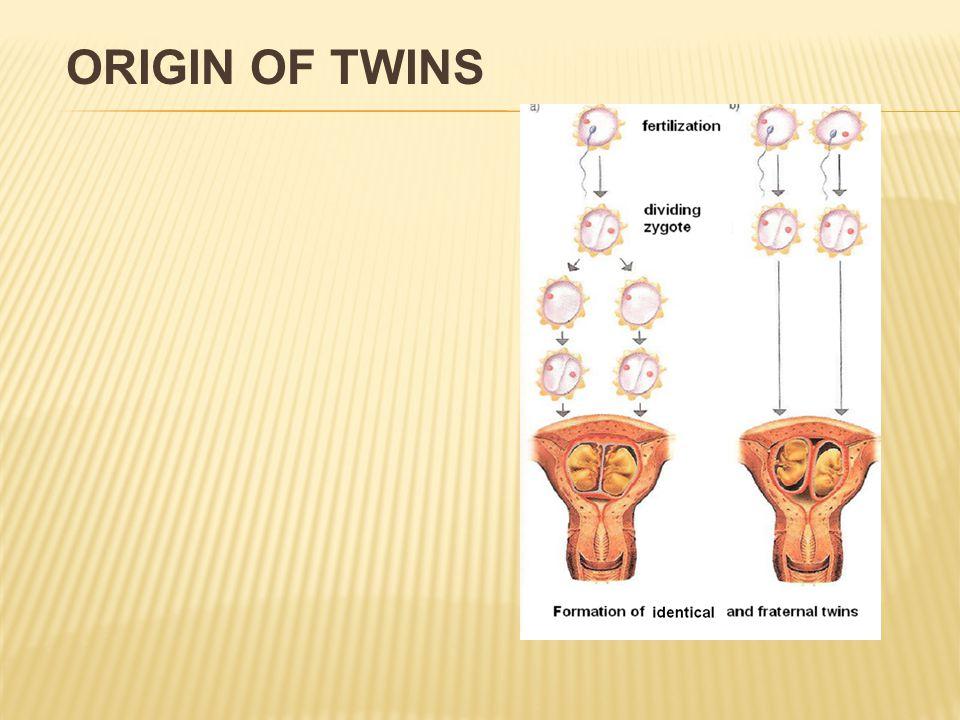 ORIGIN OF TWINS
