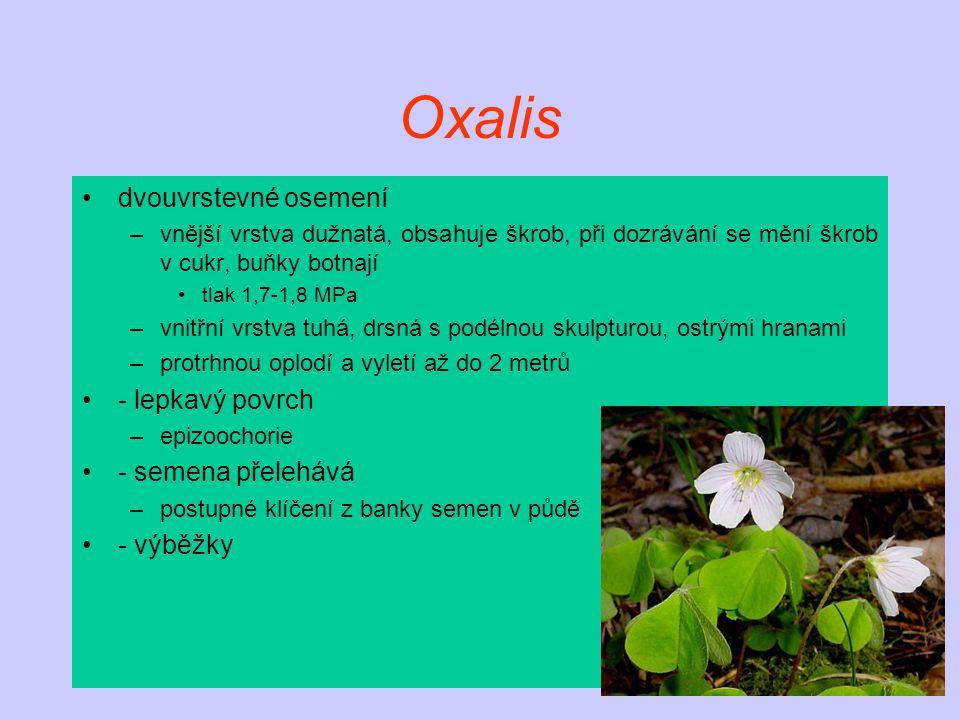Oxalis dvouvrstevné osemení –vnější vrstva dužnatá, obsahuje škrob, při dozrávání se mění škrob v cukr, buňky botnají tlak 1,7-1,8 MPa –vnitřní vrstva