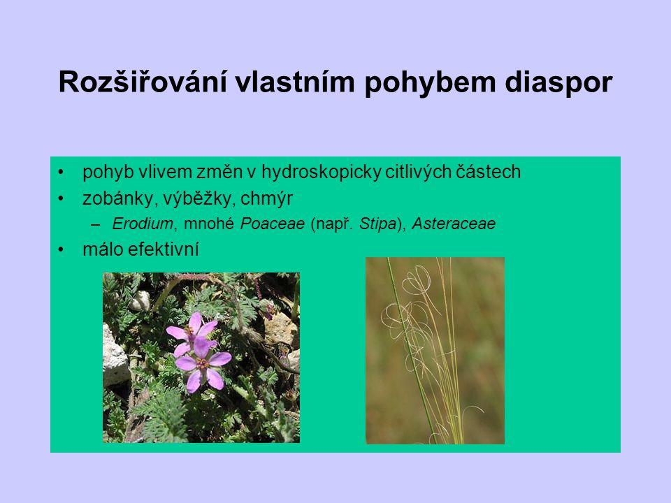 Rozšiřování vlastním pohybem diaspor pohyb vlivem změn v hydroskopicky citlivých částech zobánky, výběžky, chmýr –Erodium, mnohé Poaceae (např. Stipa)