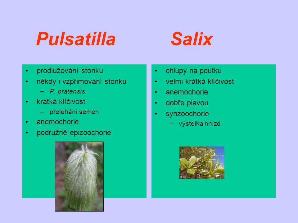Pulsatilla Salix prodlužování stonku někdy i vzpřimování stonku –P. pratensis krátká klíčivost –přeléhání semen anemochorie podružně epizoochorie chlu
