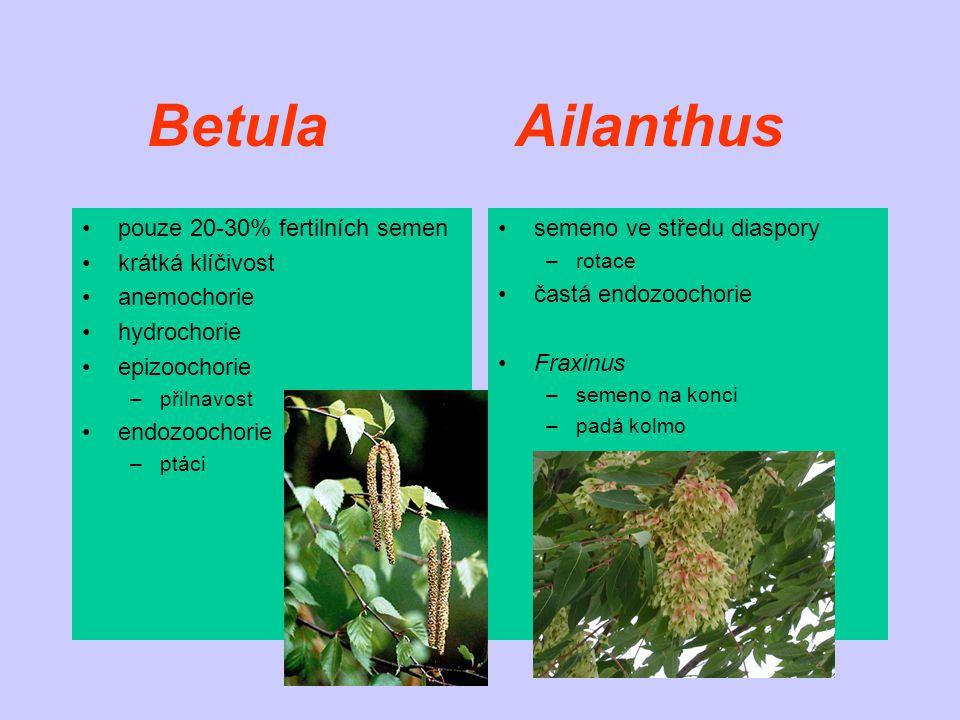 Betula Ailanthus pouze 20-30% fertilních semen krátká klíčivost anemochorie hydrochorie epizoochorie –přilnavost endozoochorie –ptáci semeno ve středu