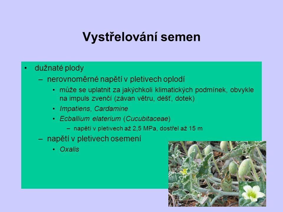 Vystřelování semen dužnaté plody –nerovnoměrné napětí v pletivech oplodí může se uplatnit za jakýchkoli klimatických podmínek, obvykle na impuls zvenč