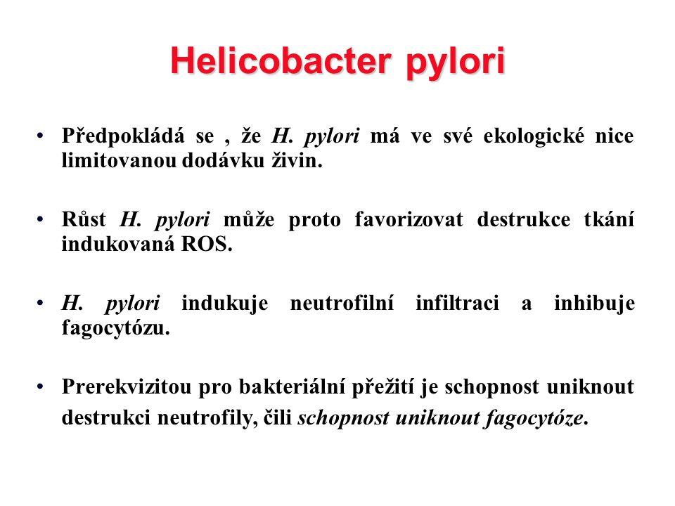 Helicobacter pylori Předpokládá se, že H. pylori má ve své ekologické nice limitovanou dodávku živin. Růst H. pylori může proto favorizovat destrukce