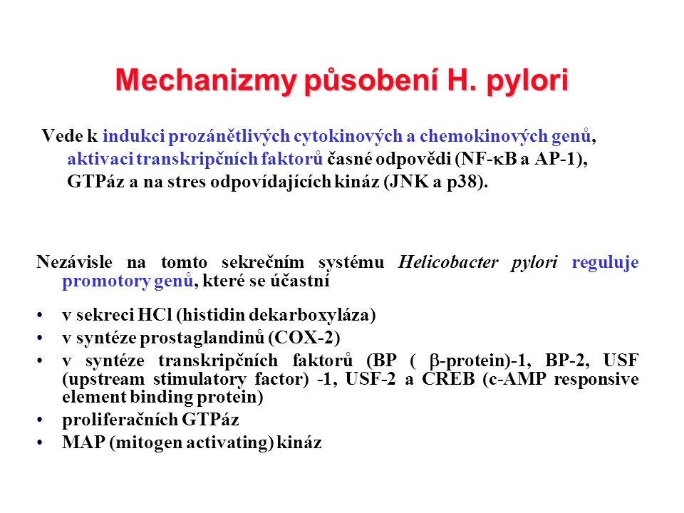 Mechanizmy působení H. pylori Vede k indukci prozánětlivých cytokinových a chemokinových genů, aktivaci transkripčních faktorů časné odpovědi (NF-  B