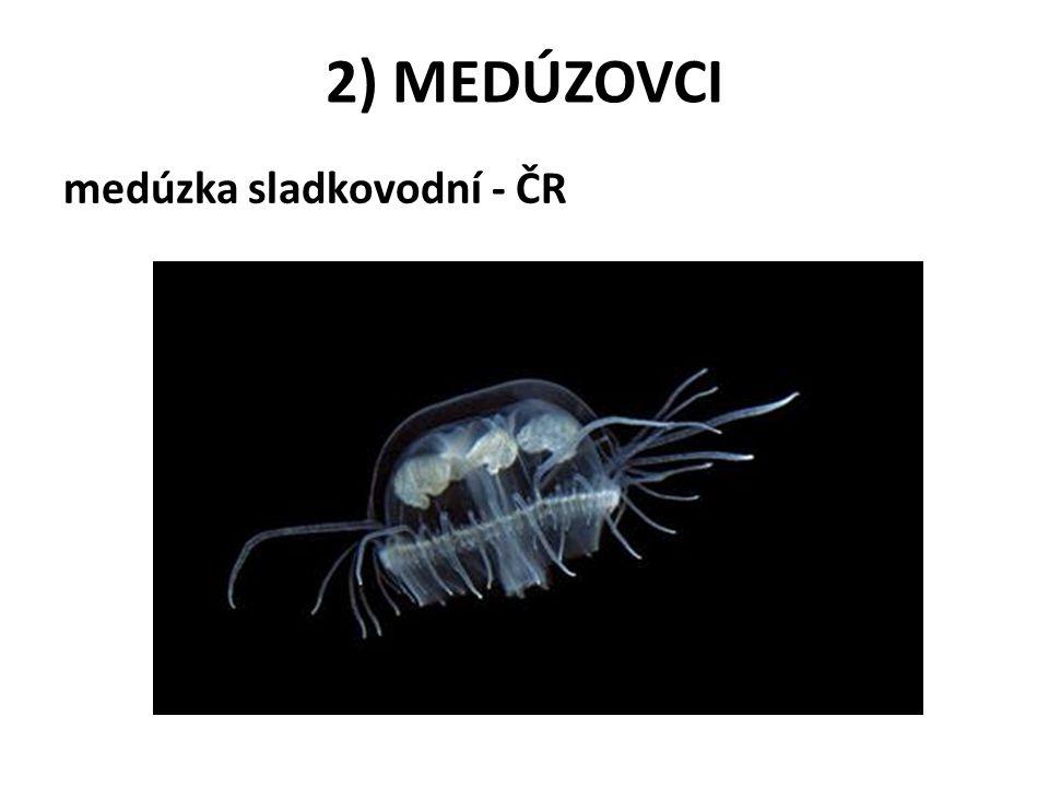 2) MEDÚZOVCI medúzka sladkovodní - ČR