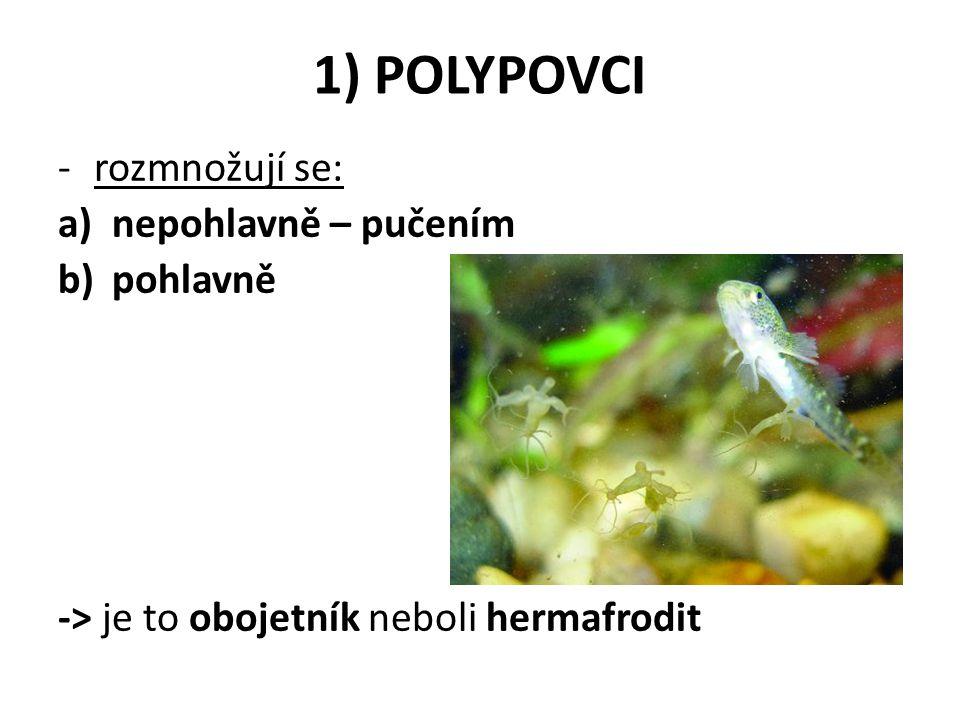 Zápis (tohle si nepiš!!!!) 2) MEDŮZOVCI -rosolovité tělo ve tvaru zvonu -> volně pohyblivá -mají smyslové orgány pro orientaci -žahavé buňky slouží k lovu -rozmnožování: RODOZMĚNA - střídá se nepohlavní stádium polyp s pohlavním stádiem medúzou -zástupce- medúza čtyřhranka, talířovka, medúzka sladkovodní( žije v ČR)