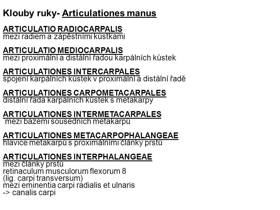 ARTICULATIO RADIOCARPALIS mezi radiem a zápěstními kůstkami ARTICULATIO MEDIOCARPALIS mezi proximální a distální řadou karpálních kůstek ARTICULATIONES INTERCARPALES spojení karpálních kůstek v proximální a distální řadě ARTICULATIONES CARPOMETACARPALES distální řada karpálních kůstek s metakarpy ARTICULATIONES INTERMETACARPALES mezi bazemi sousedních metakarpů ARTICULATIONES METACARPOPHALANGEAE hlavice metakarpů s proximálními články prstů ARTICULATIONES INTERPHALANGEAE mezi články prstů retinaculum musculorum flexorum 8 (lig.