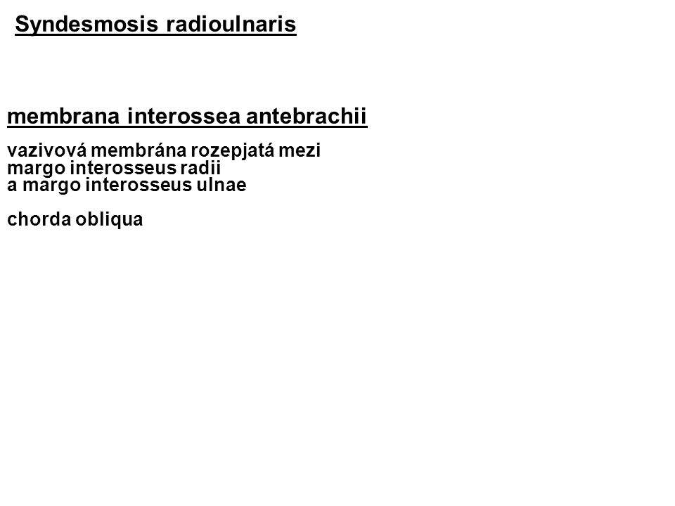 Syndesmosis radioulnaris membrana interossea antebrachii vazivová membrána rozepjatá mezi margo interosseus radii a margo interosseus ulnae chorda obliqua