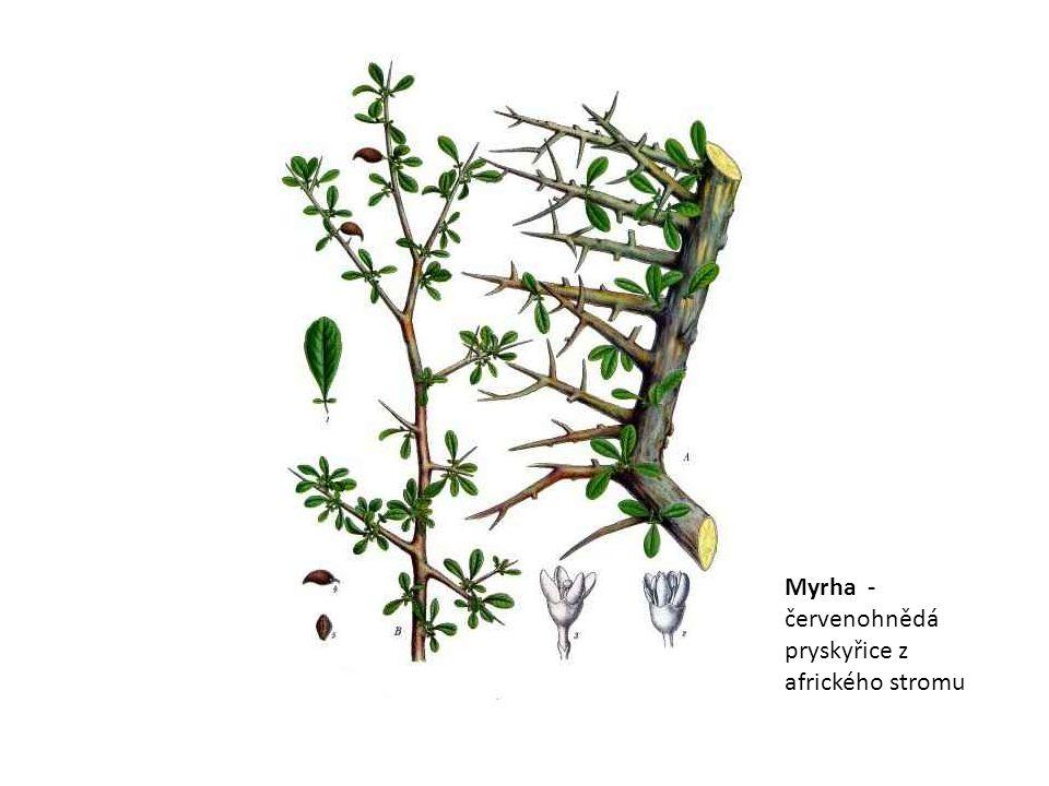 Myrha - červenohnědá pryskyřice z afrického stromu