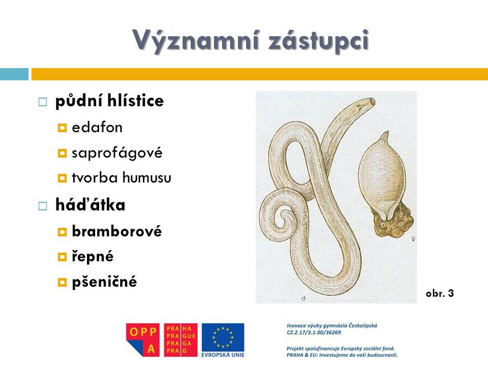 Významní zástupci  půdní hlístice  edafon  saprofágové  tvorba humusu  háďátka  bramborové  řepné  pšeničné obr. 3