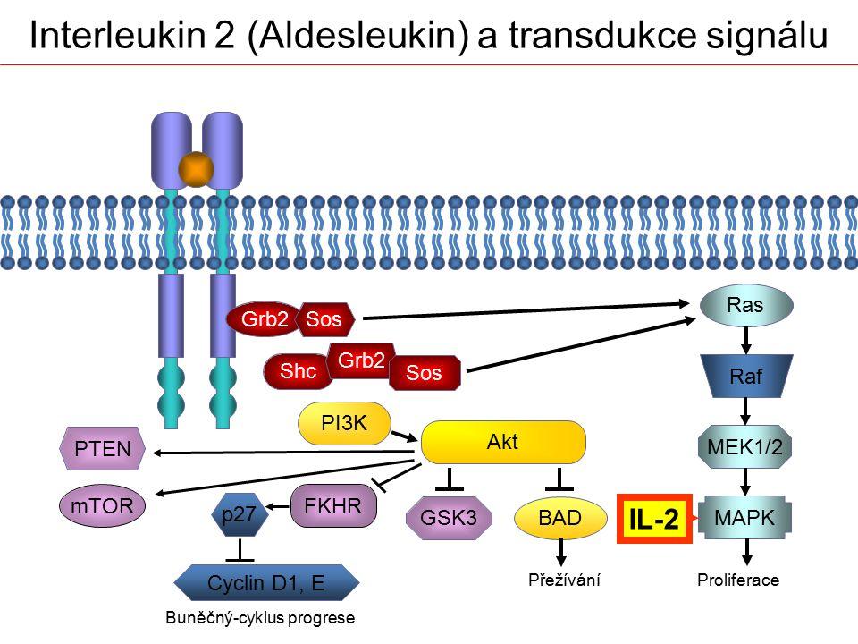 Grb2 Sos Shc Grb2 Sos PI3K Akt Ras Raf MEK1/2 MAPK BAD PřežíváníProliferace PTEN mTOR Buněčný-cyklus progrese FKHR GSK3 p27 Cyclin D1, E Interleukin 2