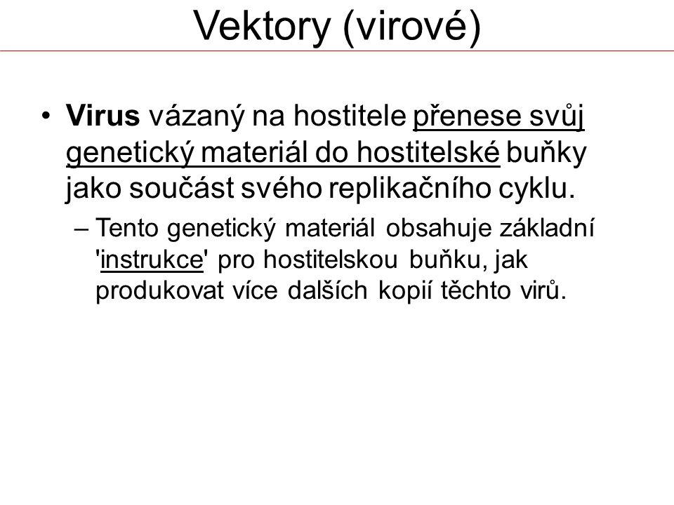 Vektory (virové) Virus vázaný na hostitele přenese svůj genetický materiál do hostitelské buňky jako součást svého replikačního cyklu. –Tento genetick