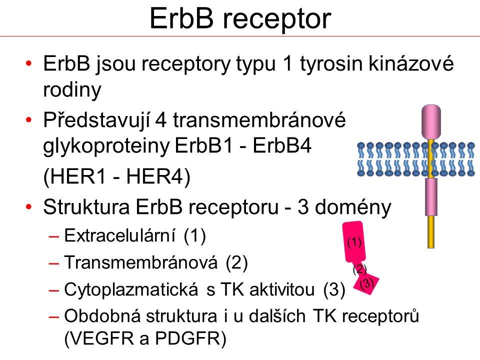 ErbB receptor ErbB jsou receptory typu 1 tyrosin kinázové rodiny Představují 4 transmembránové glykoproteiny ErbB1 - ErbB4 (HER1 - HER4) Struktura Erb