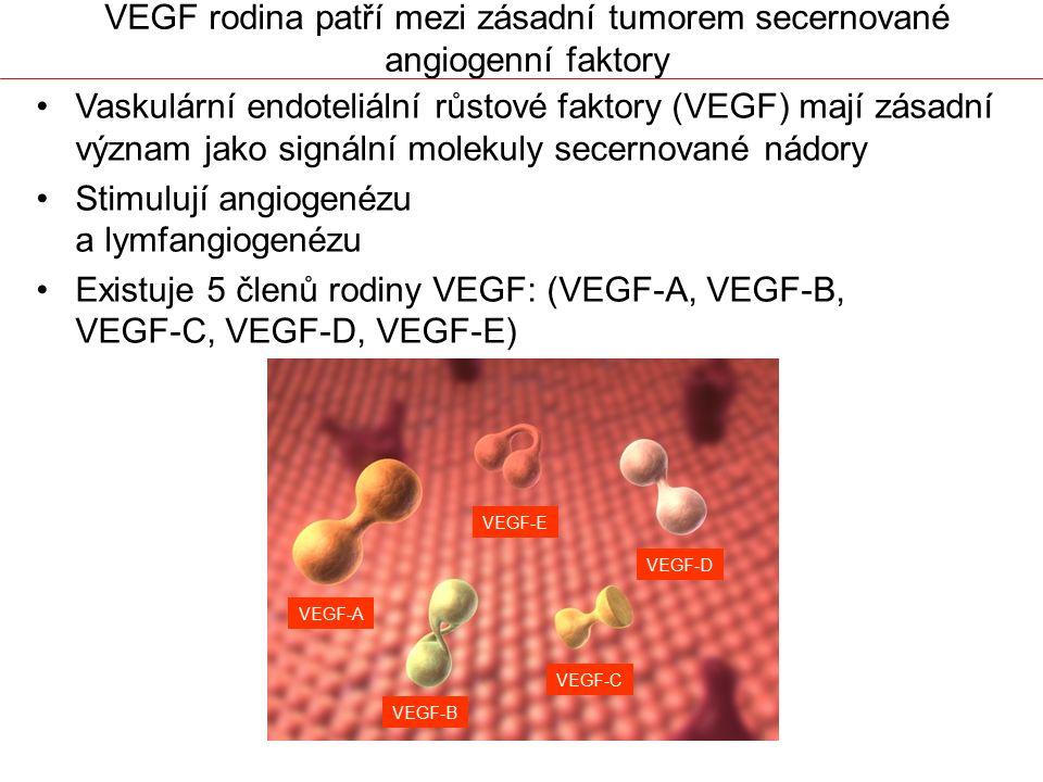 VEGF rodina patří mezi zásadní tumorem secernované angiogenní faktory Vaskulární endoteliální růstové faktory (VEGF) mají zásadní význam jako signální