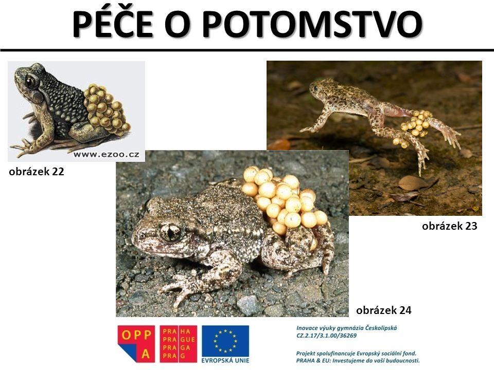 PÉČE O POTOMSTVO obrázek 22 obrázek 23 obrázek 24