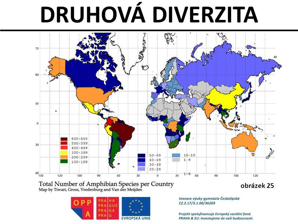 DRUHOVÁ DIVERZITA obrázek 25