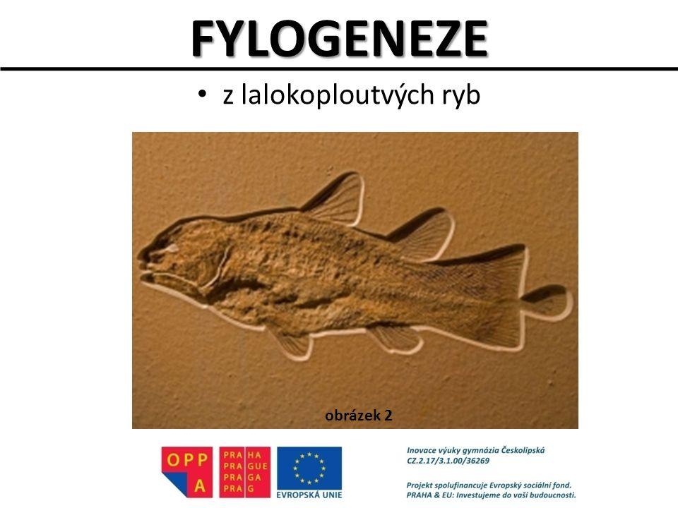 ZDROJE OBRÁZKŮ Obr.1: VANDRA, Radek. Wildlife and Nature Photography [online].