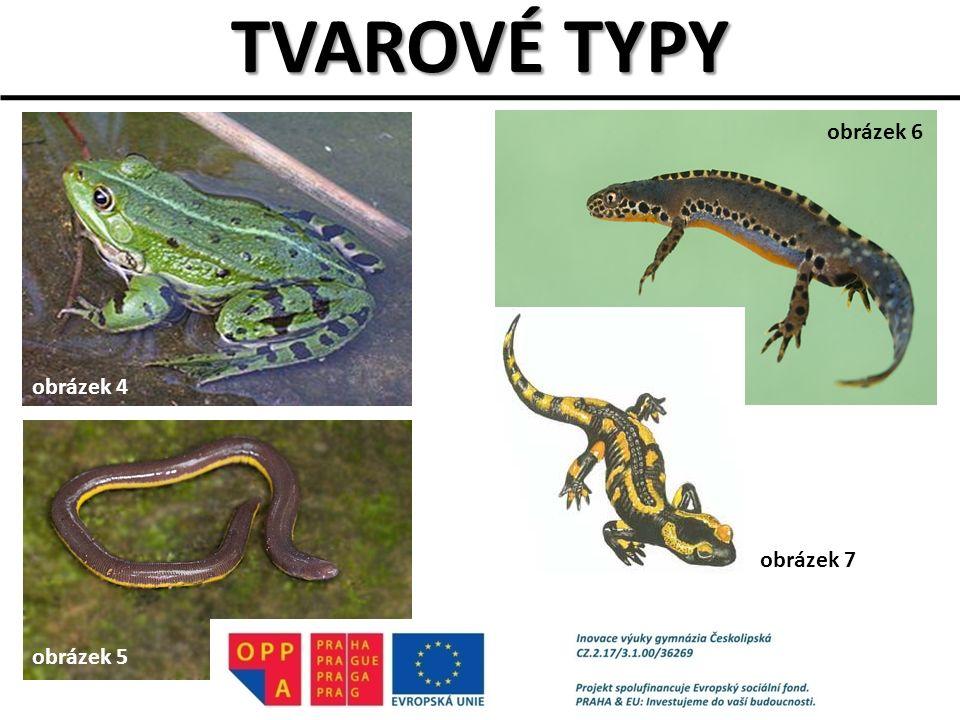 TVAROVÉ TYPY obrázek 4 obrázek 5 obrázek 6 obrázek 7