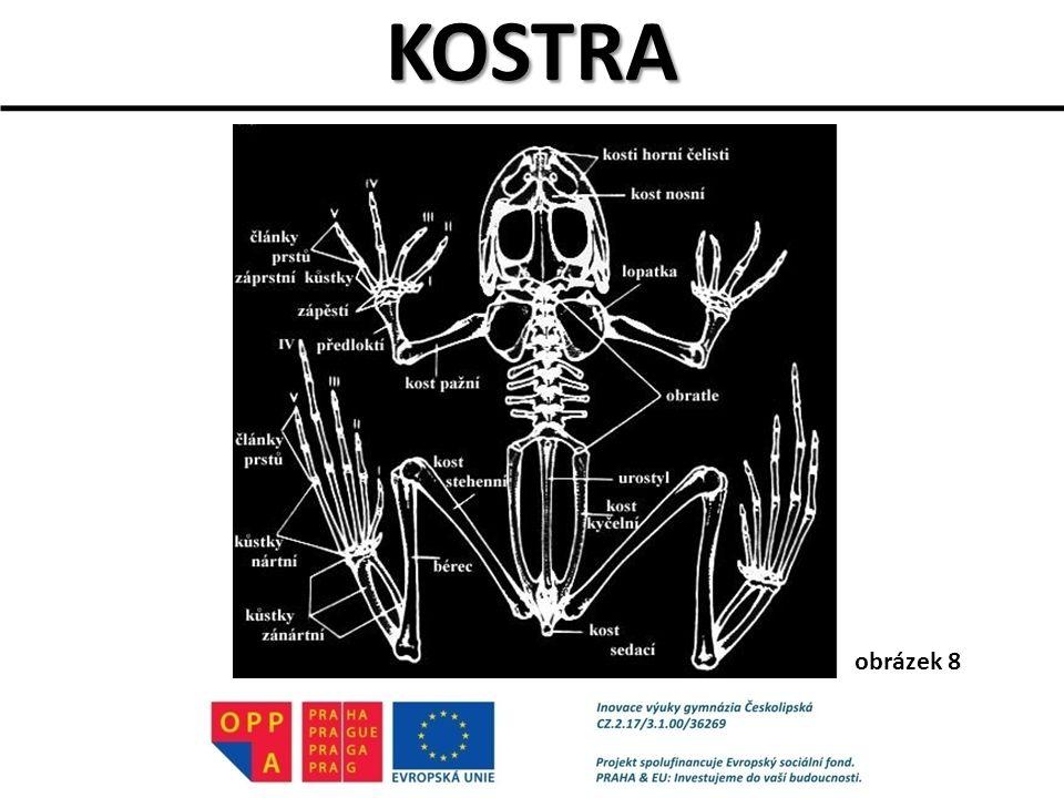 DRUHOVÁ DIVERZITA OBOJŽIVELNÍKŮ V ČR pouze 21 druhů, z toho 8 ohrožených http://www.veronica.cz/?id=274