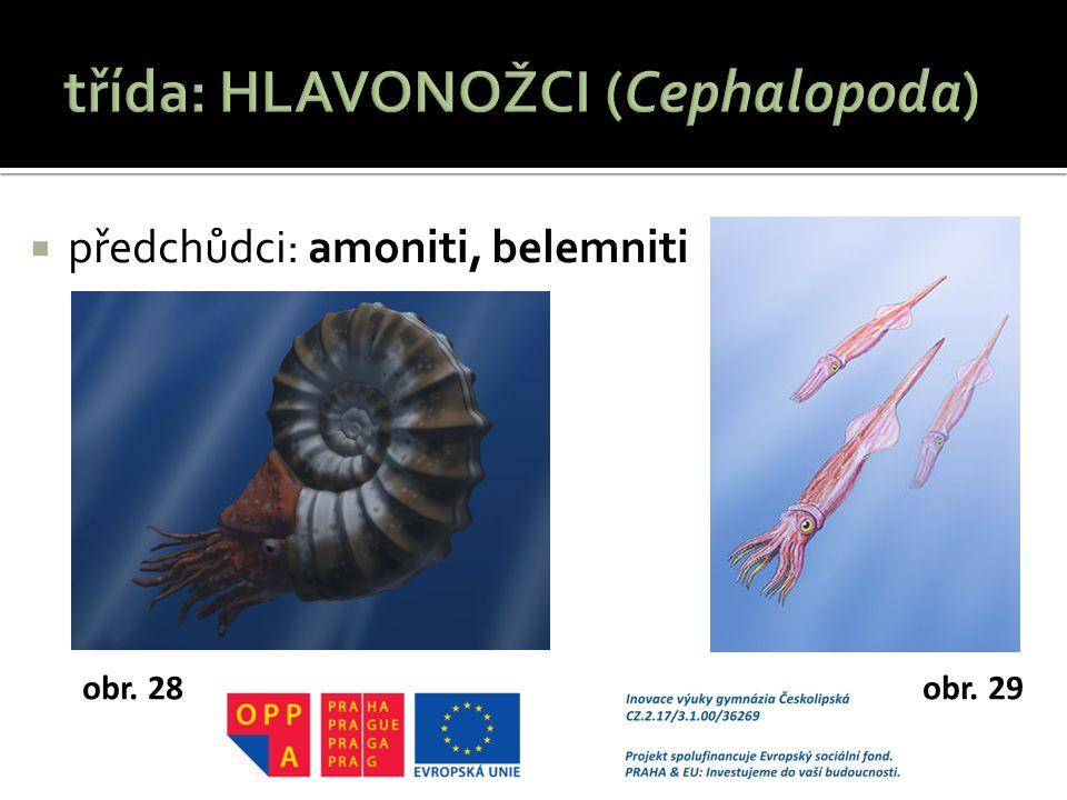  předchůdci: amoniti, belemniti obr. 28obr. 29