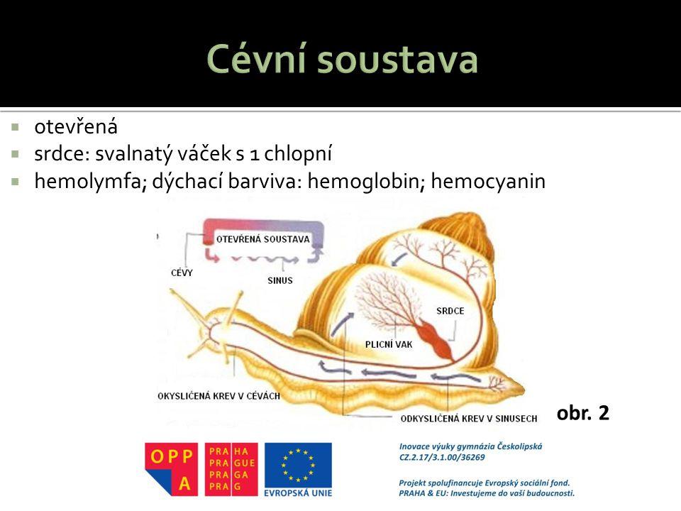  otevřená  srdce: svalnatý váček s 1 chlopní  hemolymfa; dýchací barviva: hemoglobin; hemocyanin obr. 2