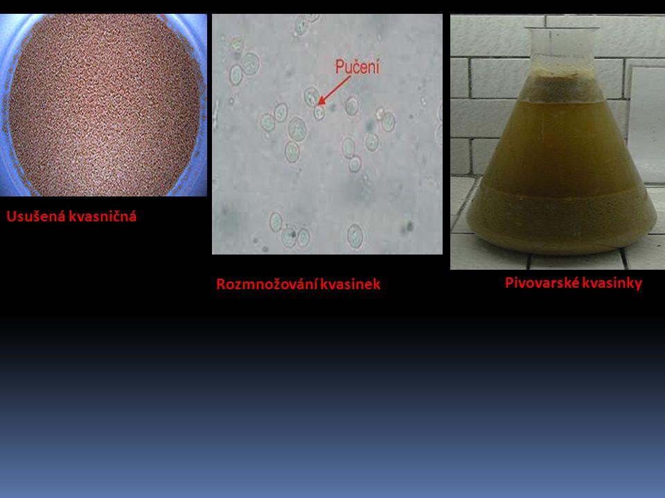 Obrázky Usušená kvasničná kultura Rozmnožování kvasinek Pivovarské kvasinky