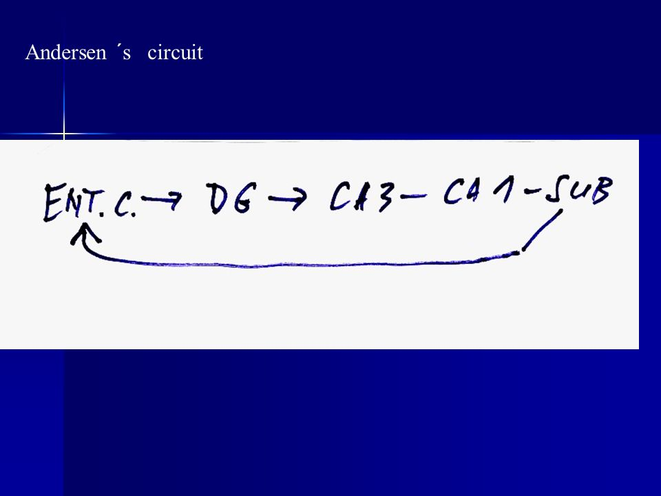 Andersen ´s circuit