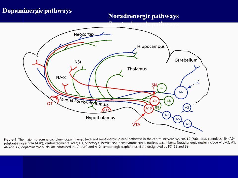 Dopaminergic pathways Noradrenergic pathways Serotoninergic pathways