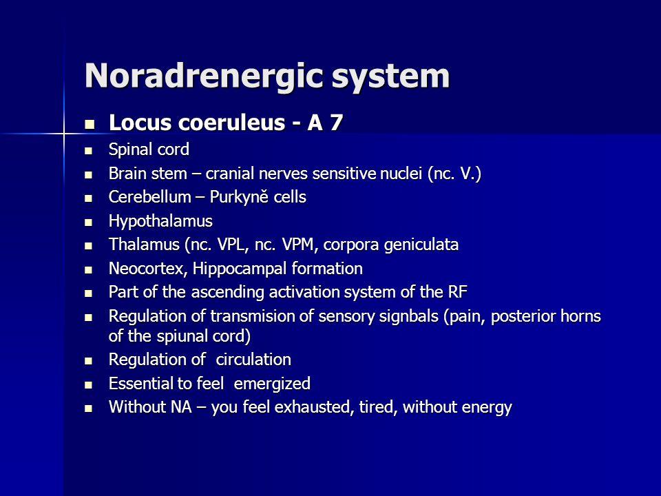 Noradrenergic system Locus coeruleus - A 7 Locus coeruleus - A 7 Spinal cord Spinal cord Brain stem – cranial nerves sensitive nuclei (nc. V.) Brain s