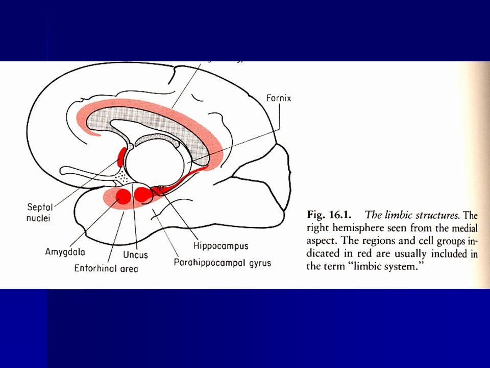 Amygdala (amygdalar nuclei) - connections Corticomedial nuclei - receive afferents from olfactory bulb, olfactory cortex, hypothalamus, septum Corticomedial nuclei - receive afferents from olfactory bulb, olfactory cortex, hypothalamus, septum Basolateral nuclei - receive afferents from the thalamus and parts of the cerebral cortex (prefrontal, temporal ) Basolateral nuclei - receive afferents from the thalamus and parts of the cerebral cortex (prefrontal, temporal ) Efferent connections – hypothalamus (stria terminalis, VM), thalamus (MD), hippocampal formation (28, subiculum), septal nuclei, ventral striatum, prefrontal and temporal cortex, brain stem nuclei (SGC, RF, parasympathetic cranial nerve nuclei.