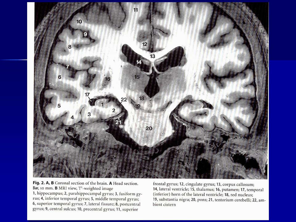 Amygdala – functions I.