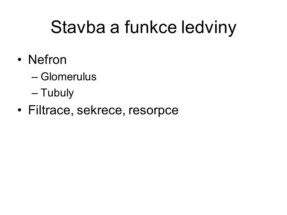 Stavba a funkce ledviny Nefron –Glomerulus –Tubuly Filtrace, sekrece, resorpce