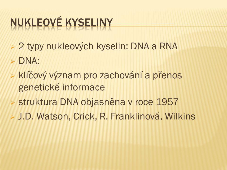  2 typy nukleových kyselin: DNA a RNA  DNA:  klíčový význam pro zachování a přenos genetické informace  struktura DNA objasněna v roce 1957  J.D.