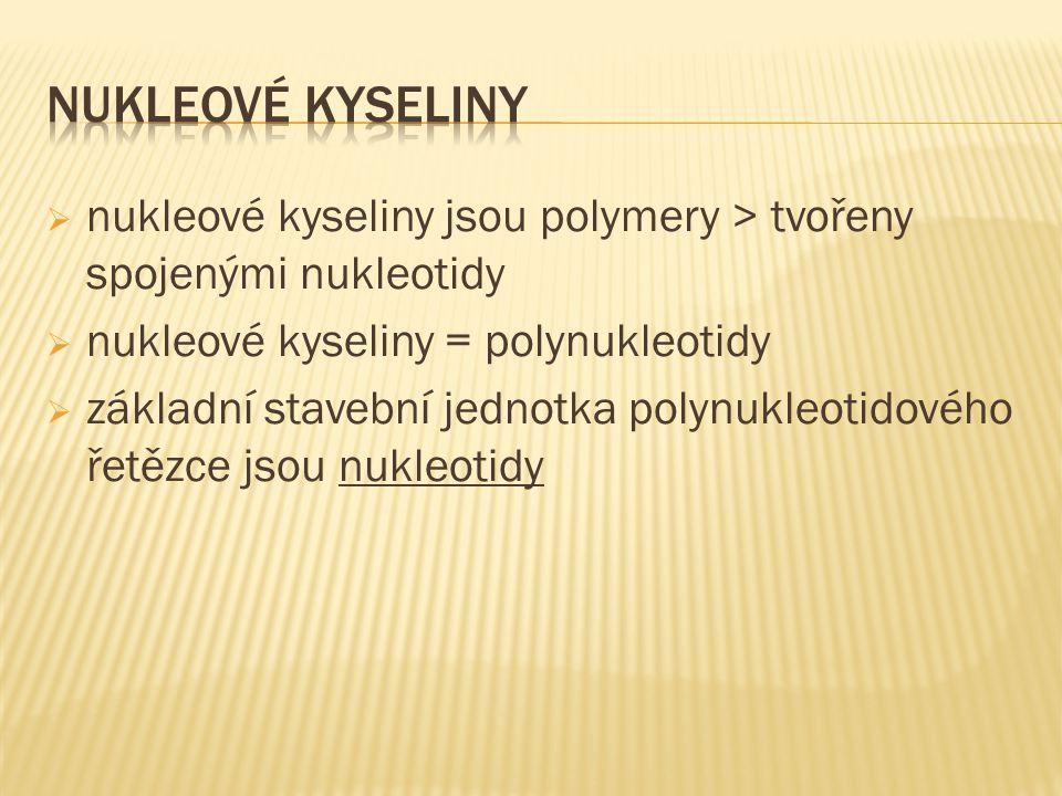  nukleové kyseliny jsou polymery > tvořeny spojenými nukleotidy  nukleové kyseliny = polynukleotidy  základní stavební jednotka polynukleotidového řetězce jsou nukleotidy