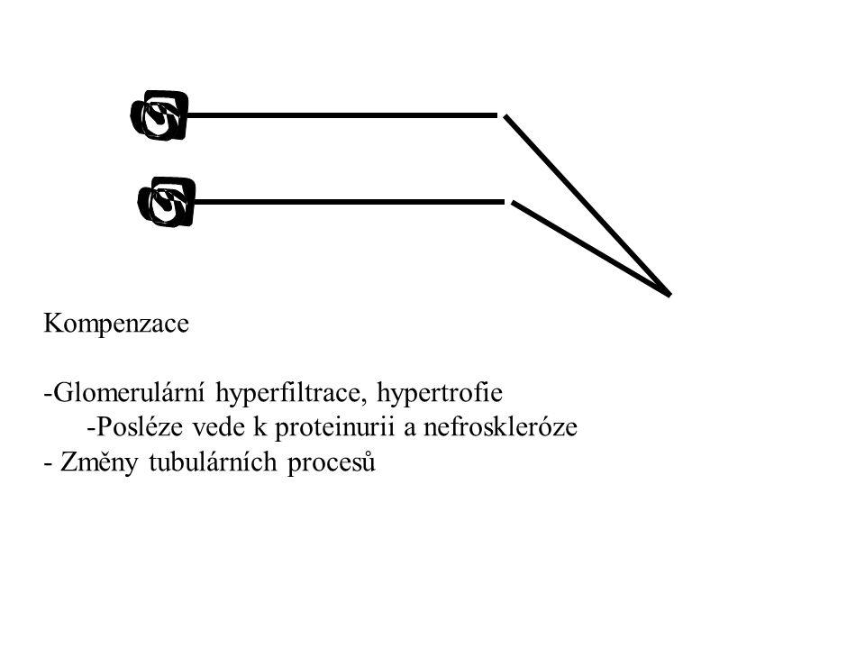 Kompenzace -Glomerulární hyperfiltrace, hypertrofie -Posléze vede k proteinurii a nefroskleróze - Změny tubulárních procesů
