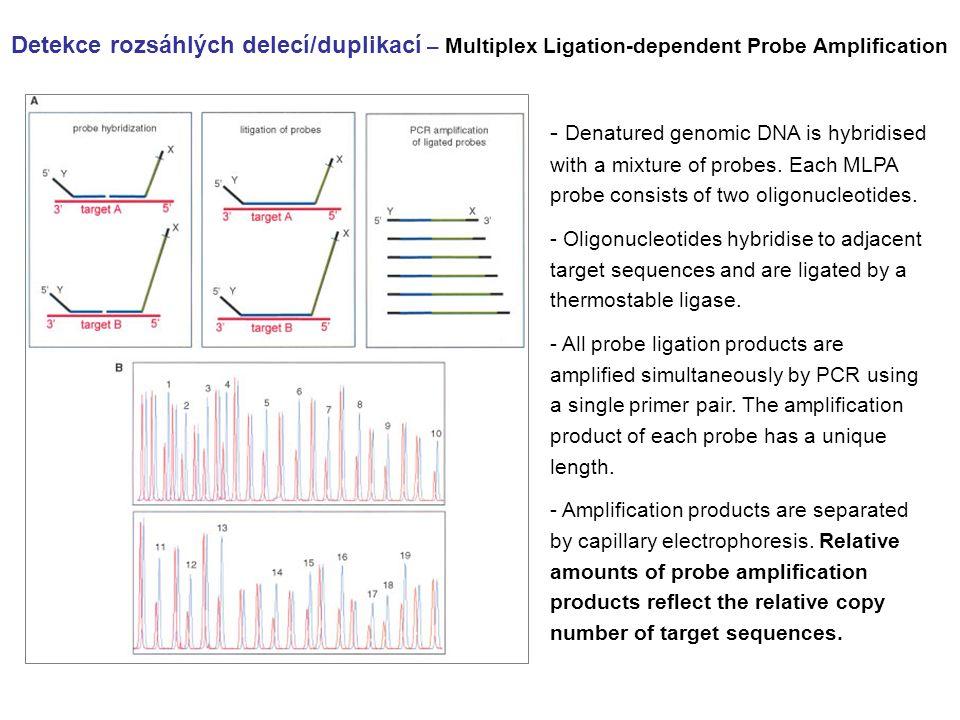 Detekce rozsáhlých delecí/duplikací – Multiplex Ligation-dependent Probe Amplification - Denatured genomic DNA is hybridised with a mixture of probes.