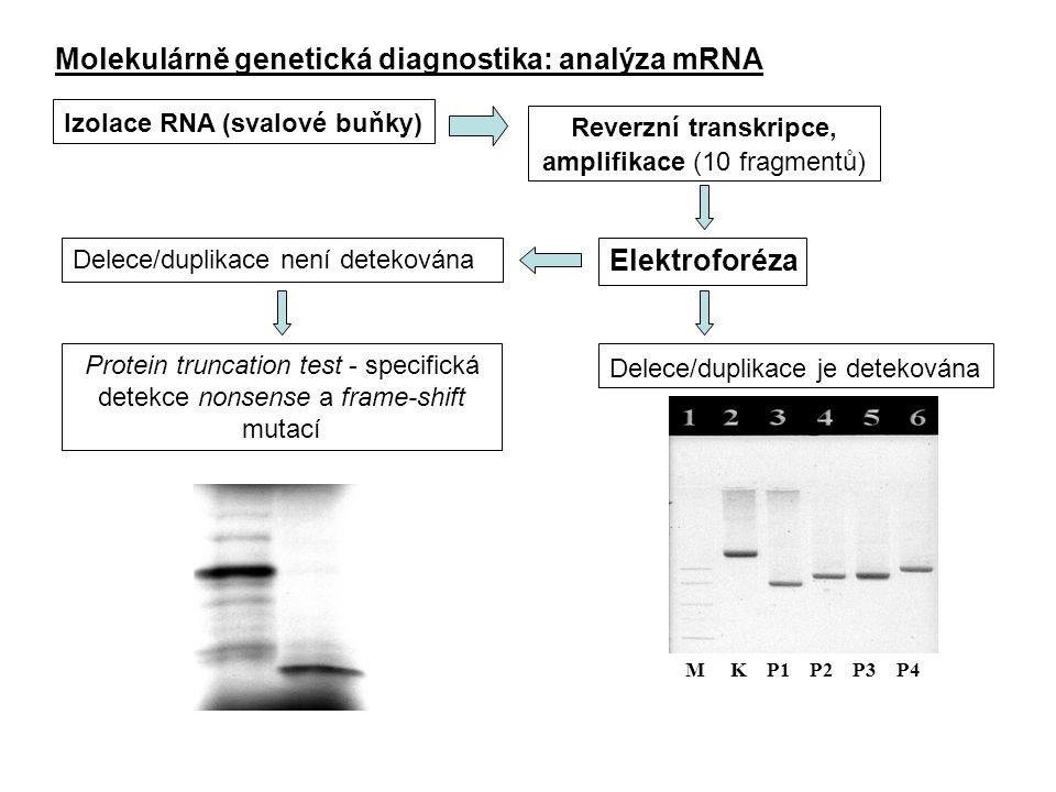 Izolace RNA (svalové buňky) Reverzní transkripce, amplifikace (10 fragmentů) Elektroforéza Protein truncation test - specifická detekce nonsense a fra