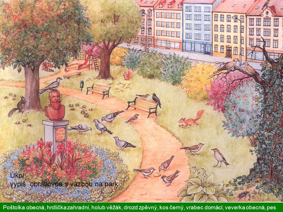 Úkol: vypiš obratlovce s vazbou na park Poštolka obecná, hrdlička zahradní, holub věžák, drozd zpěvný, kos černý, vrabec domácí, veverka obecná, pes