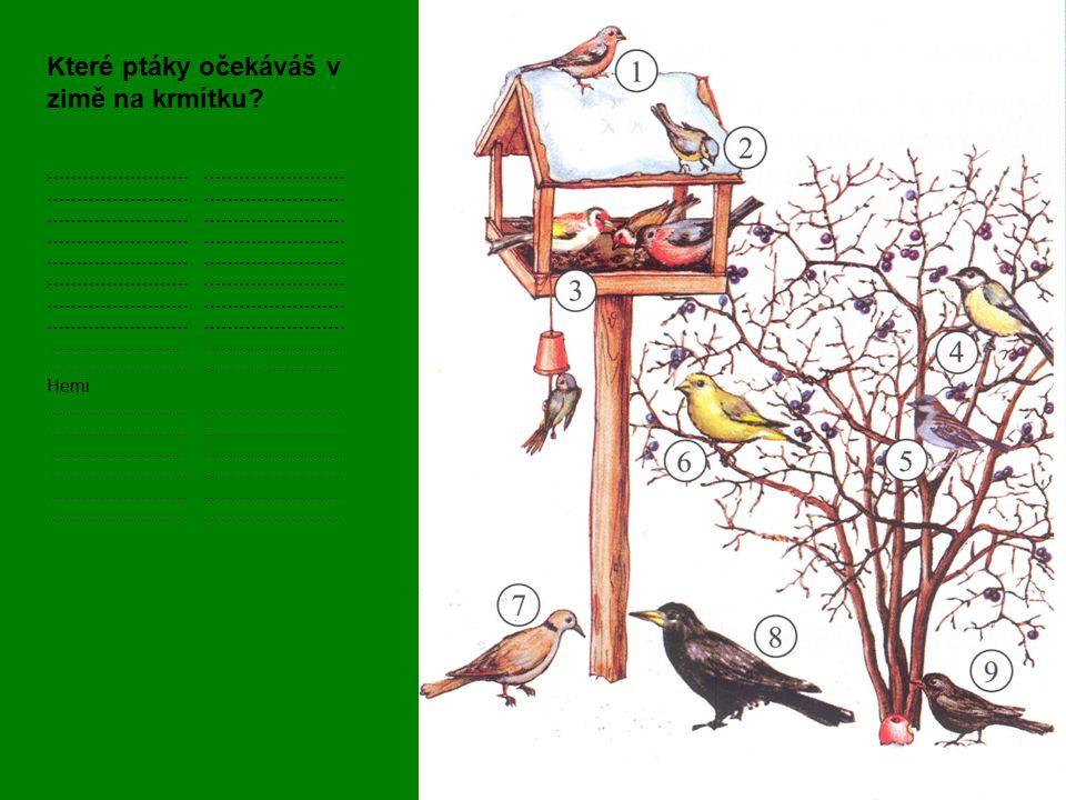 Které ptáky očekáváš v zimě na krmítku? …………………… …………………… ………. …………. Hemi ……………………