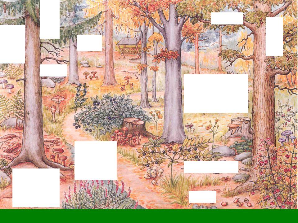 Užovka obojková, výr velký, sojka obecná, veverka obecná (rez.