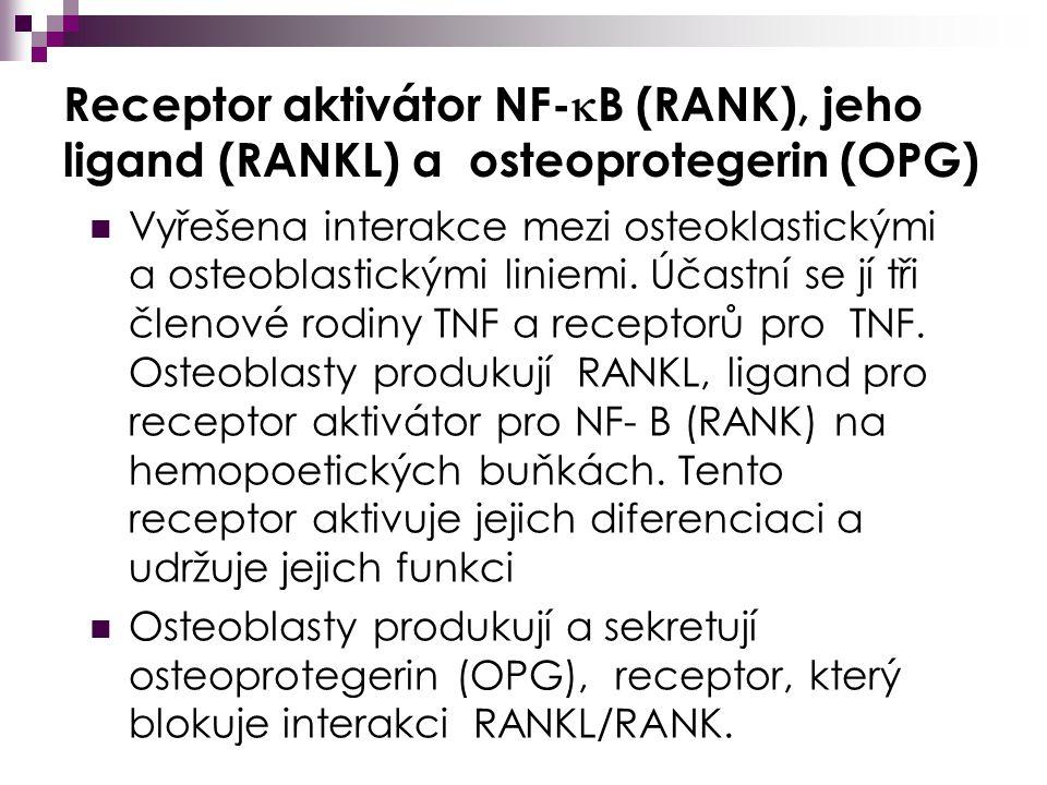 Receptor aktivátor NF-  B (RANK), jeho ligand (RANKL) a osteoprotegerin (OPG) Vyřešena interakce mezi osteoklastickými a osteoblastickými liniemi.
